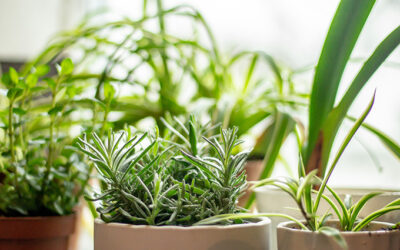Tips to Grow an Indoor Herb Garden That Stays Alive All Winter