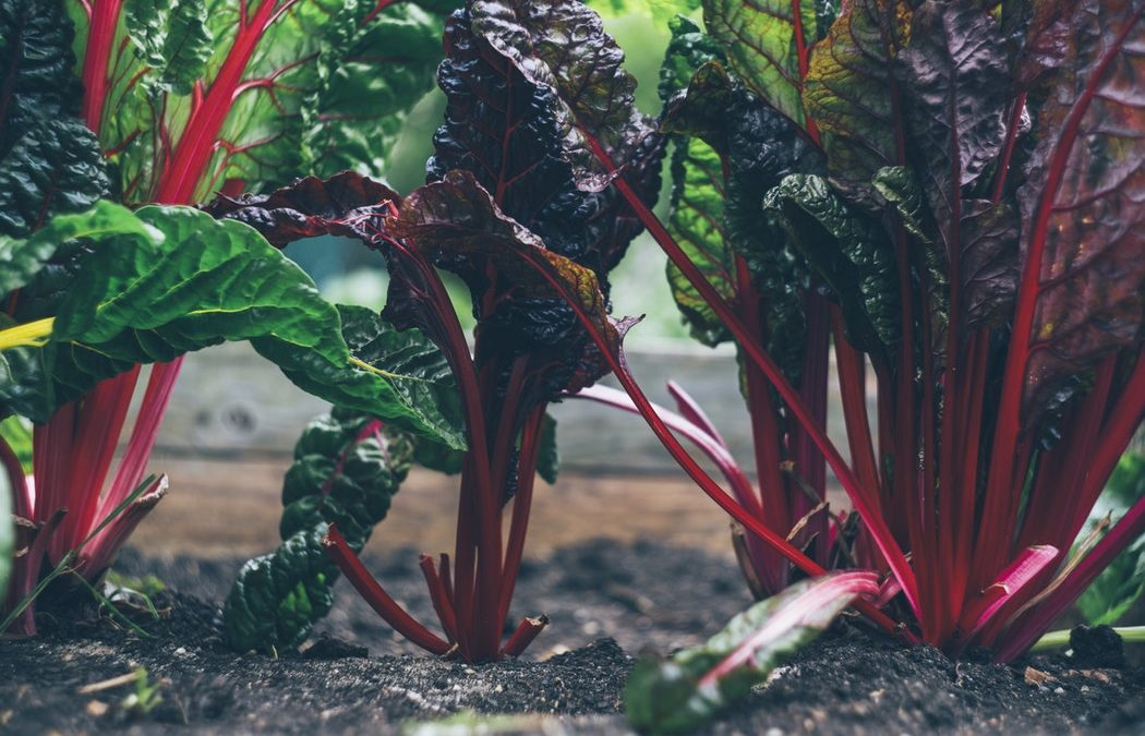 4 Home Vegetable Garden Ideas on a Budget