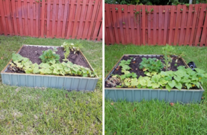 bonita adams gardener's choice testimonial