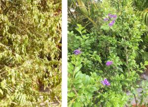 Gardener's Choice Testimonial, Reviews, Gardener's Choice Reviews